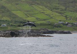 Pelagic to Coastal: The Expansion of Bottlenose Dolphins