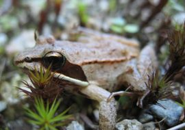 Where do wood frogs go when there's no wood?