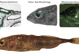 Genetic and epigenetic relationships across evolutionary and ecological timescales in Icelandic stickleback